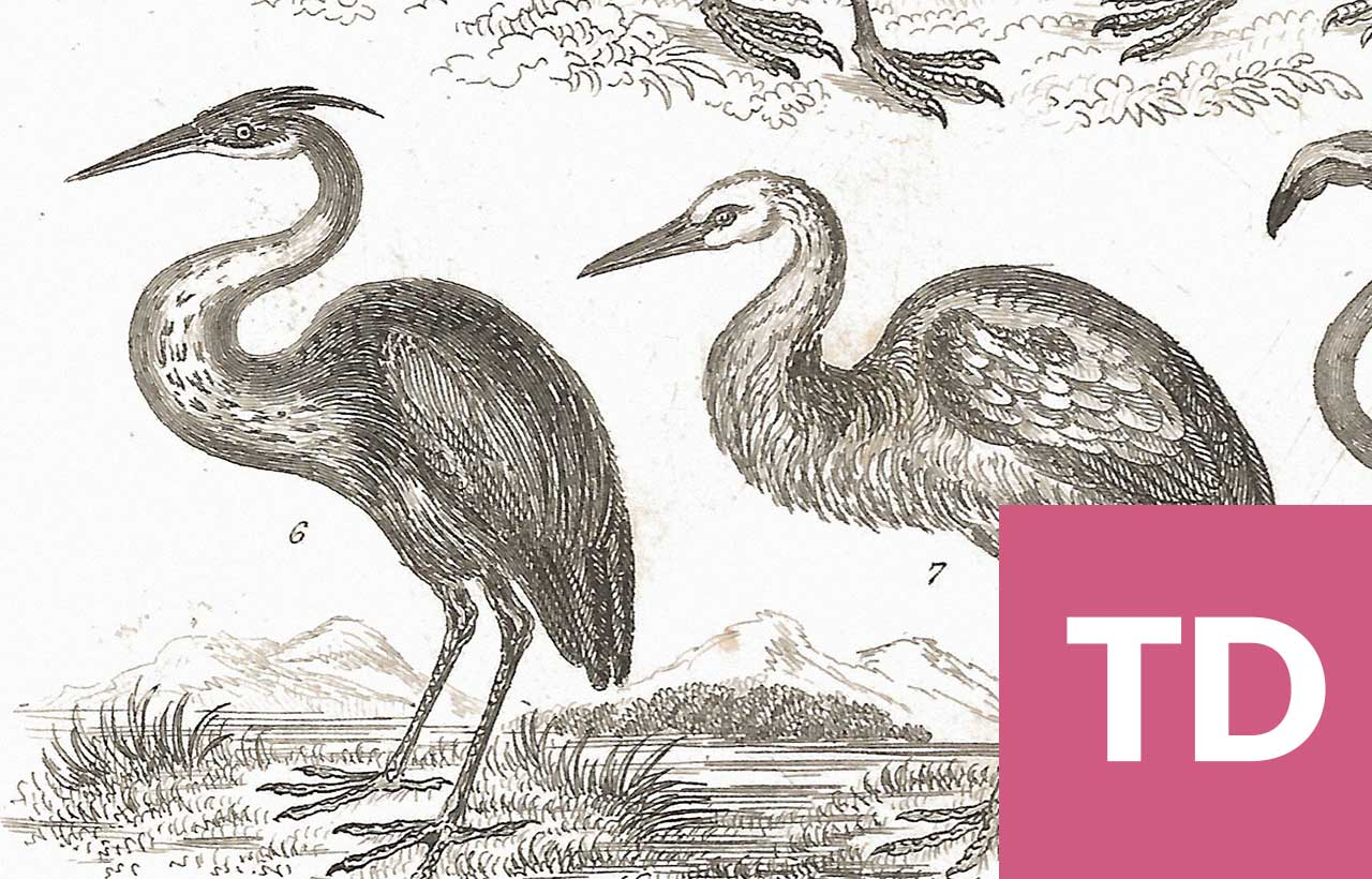 State Library of Queensland blog birds